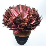 Cameroon Hat with feathers